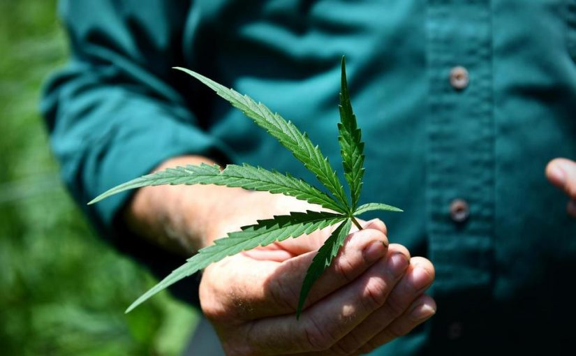 What's the Evidence That Hemp Could Be Useful in Treating Cancer?
